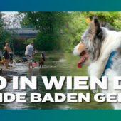 Wo in Wien die Hunde Baden gehen